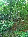 Gornja Trepca Spa in Serbia 5260 17.jpg
