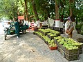 Grapes vendors Turpan.jpg
