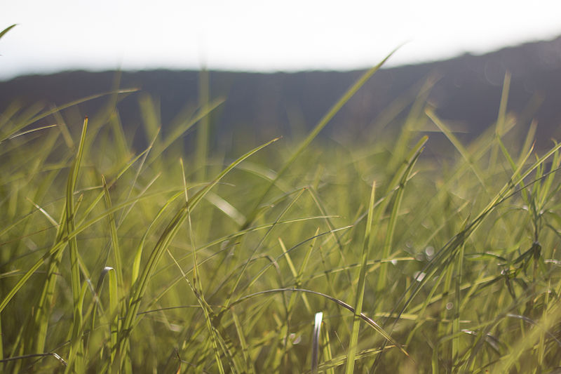 grass on a warm day