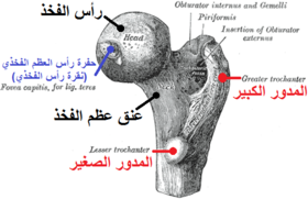 Gray243 Arabic YM.png