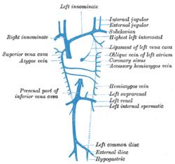 ... parietal veins . (Subclavian vein labeled at right, third from top External Jugular Vein Tributaries
