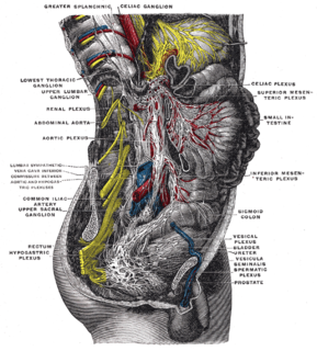 Sacral splanchnic nerves