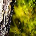 Green (2683589731).jpg