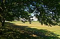 Greenwich Park - View North towards Queen's House.jpg