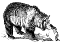 Grizzly bear (PSF).png