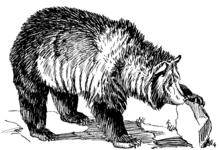 User:Darwinbish - Wikipedia, the free encyclopedia