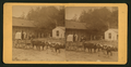 H.S. Market wagon, (men in a wagon pulled by four oxen), by J. F. Kennedy.png