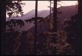 HEMLOCK TREES IN OLYMPIC NATIONAL TIMBERLAND, WASHINGTON NEAR OLYMPIC NATIONAL PARK - NARA - 555119.tif