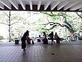 HKU 香港大學 Sun Yat-Sen Lotus pool tree April 2019 SSG 02.jpg