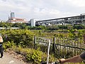 HK 上水 Sheung Shui 梧桐河 Ng Tung River near 得月樓警崗 Tak Yuet Lau Police Post November 2020 SS2 18.jpg