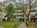 HK 油麻地 Yau Ma Tei 九龍華仁書院 Kowloon Wah Yan College back door campus garden yard Jan-2014 tree.JPG