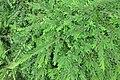 HK 西營盤 Sai Ying Pun 香港 中山紀念公園 Dr Sun Yat Sen Memorial Park plants green leaves Sept 2017 IX1 01.jpg