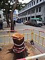 HK Canton Road tree after the storm near 油麻地警署 Yau Ma Tei Police Station December 2018 SSG 01.jpg
