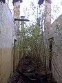 Hajmáskéri tüzérlaktanya - Szobanövényzet - panoramio.jpg