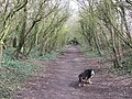 Halton Railway - Footpath East of the Canal - geograph.org.uk - 1235764.jpg