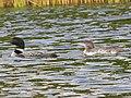 Ham Lake, MN 55304, USA - panoramio (13).jpg