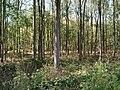 Hambach forest 55.jpg