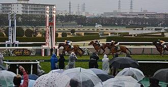 Tulip Sho - Kokorono Ai wins the 2015 Tulip Sho