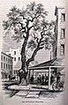 Harpers.New .Monthly.Pear .Tree .1862-e1487357415513.jpg