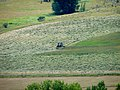 Haymaking 1 mowing.jpg