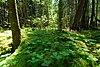 Haymeadow Flowage.jpg
