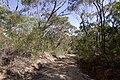 Heathcote NSW 2233, Australia - panoramio (54).jpg