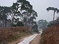 Heathland track heading north - geograph.org.uk - 1622140.jpg