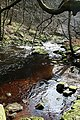 Hebden Water - geograph.org.uk - 723562.jpg
