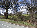 Hedge Lines by the A5104 - geograph.org.uk - 356610.jpg