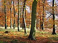 Henleyhill Wood - geograph.org.uk - 1050658.jpg