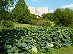 Herman B Wells Library and lotus pond - P1100157.JPG