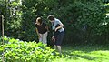 Hey Get Out Of My Vegetable Garden (8429723544).jpg