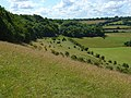 Hillside below Bledlow Ridge - geograph.org.uk - 892064.jpg