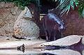 Hippopotamus0501b.jpg