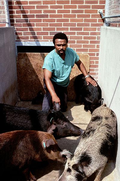 File:Hogs and handler.jpg