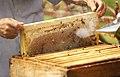 Honeycomb - Chkhorotsku.jpg