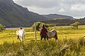 Horses at Loch Stack - panoramio.jpg