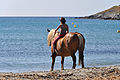 Horses at the beach in Pietra.jpg