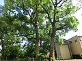 Hosoecho Kiga, Kita Ward, Hamamatsu, Shizuoka Prefecture 431-1305, Japan - panoramio (1).jpg