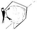 Huiszwaluw Delichon urbica Jos Zwarts 14.tif