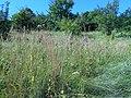 Hulyaihorodok, Cherkas'ka oblast, Ukraine, 20740 - panoramio (13).jpg