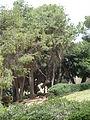 Hussamssa Garden P1220370.JPG
