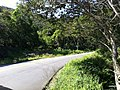 Iguape - SP - panoramio (258).jpg