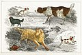 Illustration from A History of the Earth and Animated Nature by Oliver Goldsmith from rawpixel's own original edition of the publication 00085.jpg