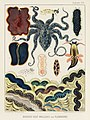 Illustration from The Great Barrier Reef of Australia (1893) by William Saville-Kent from rawpixel's own original publication 00014.jpg