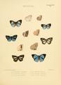 IllustrationsDiurnalLepidoptera2PlateS1b.png