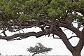 Impressions of Serengeti (33).jpg