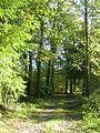 In het bos van Olterterp.JPG
