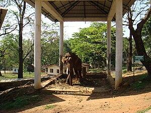 Konni, India - The elephant Soman