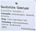 Infotafel Osterluzei.jpg